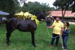 Sport, passeggiate e battesimo della sella: sui Nebrodi al via la mostra del cavallo Sanfratellano - Foto