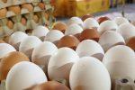 Sequestrate 175 mila uova senza tracciabilità tra Messina, Roma e Torino