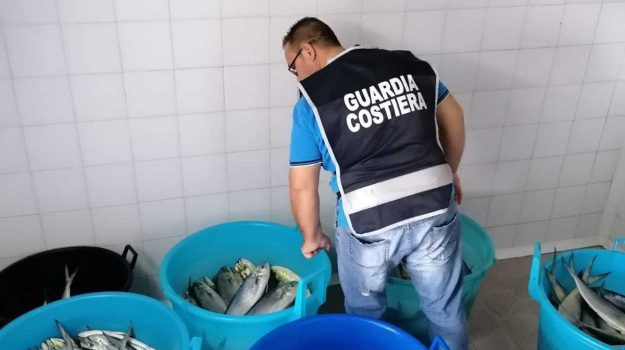sequestro pesce Crotone, Catanzaro, Calabria, Cronaca