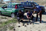 Tartarughe di una specie protetta tenute in una porcilaia, denunciato un pensionato a Rocca di Neto