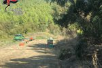 Isola Capo Rizzuto, sequestrate 67 arnie non registrate