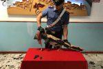 Detenzione illegale di armi e furto, due arresti nel Crotonese