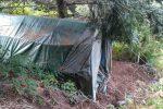 Scilla, scoperta una coltivazione di canapa indiana: distrutte 800 piante