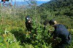 Droga a San Martino di Finita, scoperte oltre 500 piante di canapa