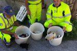 Pizzo, salvati nove cuccioli sotto il viadotto ferroviario