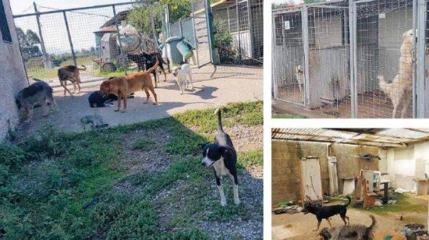 cani denutriti, canile degli orrori, lager cani, Reggio, Calabria, Cronaca