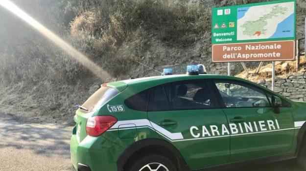 aspromonte, piromane, Reggio, Calabria, Cronaca