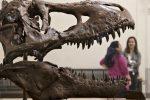 """""""Fotografata"""" la ripresa della vita dopo la fine dei dinosauri"""