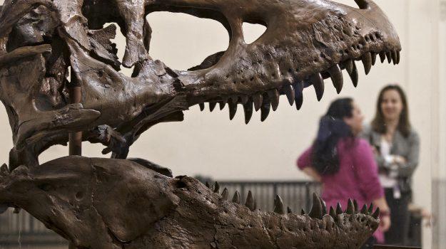 dinosauri, preistoria, Scienza Tecnica