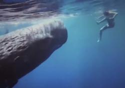 Emozionante nuotata con un capodoglio da 20 metri: l'influencer pubblica sui social le 3 regole base da seguire L'influencer Natalie Karpushenko ha condiviso con i suoi 37 mila follower di Instagram questo incredibile incontro nell'Oceano Indiano - Corriere Tv