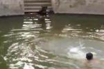 Finge di annegare. Ecco la reazione del cane