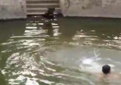 Finge di annegare. Ecco la reazione del cane L'animale dimostra di essere pronto di fronte a qualsiasi pericolo - CorriereTV