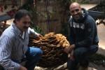 Festa del fungo a Serra San Bruno: presente un esemplare di 33 chili