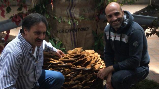 festa fungo, serra san bruno, Catanzaro, Calabria, Società