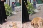 Il cane aspetta «in religioso silenzio» e mangia dopo la preghiera