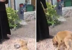 Il cane aspetta «in religioso silenzio» e mangia dopo la preghiera Il sacerdote della comunità Saint Martin, nella diocesi di Amiens, in Francia ha educato l'animale al rispetto delle regole - Dalla Rete