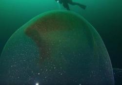 Il subacqueo incappa in una misteriosa sfera gelatinosa nel fiordo norvegese Quello che sembra un «ufo» nei fondali norvegesi in realtà è una grossa teca ovarica di calamaro, che contiene migliaia di uova - CorriereTV