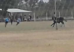 Il toro fa invasione di campo in Argentina: un ferito Durante una partita di calcio in Argentina un toro ha corso sul campo e i giocatori sono scappati a gambe levate - CorriereTV