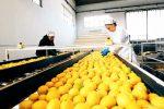 Industria alimentare, imprese siciliane al primo posto in Italia: cala l'uso di prodotti chimici