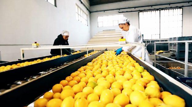 imprese siciliane, industria alimentare, prodotti chimici, Valeria Paradiso, Terra e Gusto