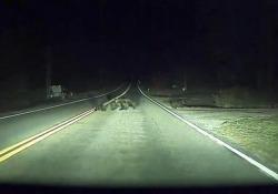 L'autopilot di Tesla e gli orsi nella notte: la frenata prima di investirli Un test che si è svolto sulle strade del Montana - Corriere Tv