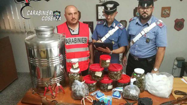 arresto Belvedere Marittimo, droga, marijuana, spaccio, Cosenza, Calabria, Cronaca