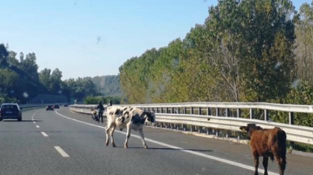 autostrada, incidente, mileto, rosarno, salerno-reggio calabria, Reggio, Calabria, Cronaca