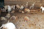 Maltempo in Sicilia, straripa un torrente a Ispica e fa strage di ovini