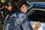 Pizzo, scattano i controlli anti prostituzione: identificati anche gli avventori