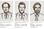 Nobel per la Medicina, premiati Kaelin, Ratcliffe e Semenza