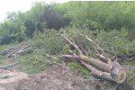 Tagliava una quercia in un terreno di un altro: arrestato un operaio di Maierato