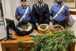 Coltivavano una piantagione di marijuana, arrestati padre e figlio a Pentone
