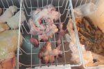 Alimenti non tracciabili, sequestrato a Messina negozio privo di autorizzazioni - Foto