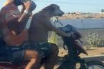 Si può portare il cane in moto? Sì, a patto che non sia così