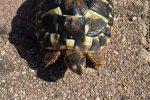 Una tartaruga Caretta caretta salvata nelle acque dello Stretto di Messina
