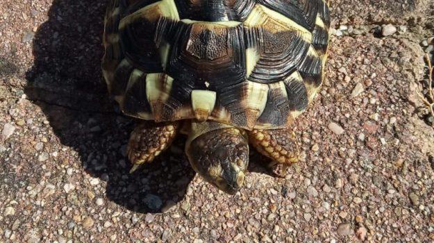 cirò marina, tartaruga, Catanzaro, Calabria, Cronaca