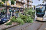 Maltempo, albero cade in viale San Martino a Messina: danni alle auto - Foto