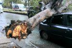 """Il vento fa strage di alberi a Messina, il Comune ai cittadini: """"Evitate di uscire di casa"""". Ancora scuole chiuse"""
