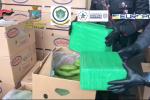 Droga tra le banane al porto di Gioia Tauro, sequestrati 1.200 chili di cocaina purissima: vale 250 milioni