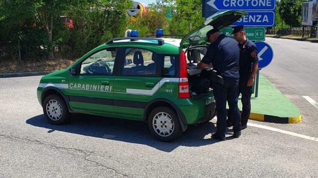 inquinamento, rifiuti, rossano, Cosenza, Calabria, Cronaca