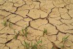 Crisi idrica nel settore agricolo, a Crotone pronto un piano d'azione