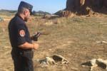 Crotone, trovate 20 carcasse abbandonate di pecore a Suvaretto