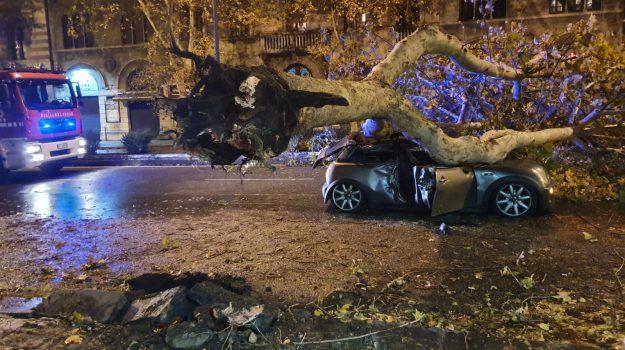 alberi crollati, maltempo messina, Massimiliano Minutoli, Messina, Sicilia, Cronaca