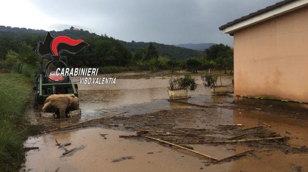 allerta meteo, maltempo, Sergio Abramo, Catanzaro, Calabria, Cronaca