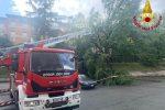 Paura a Cosenza, crolla un albero nel piazzale di via degli Stadi