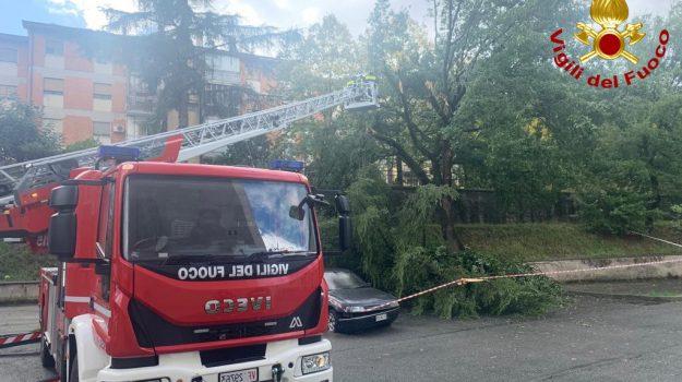 albero caduto, Cosenza, Calabria, Cronaca