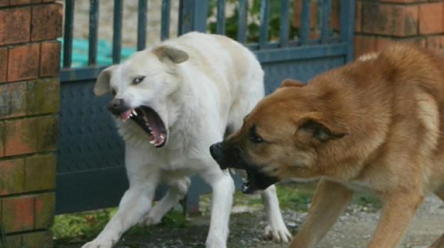 branco di cani, donna sbranata, sbranata in Francia, Frédéric Trinh, Sicilia, Mondo