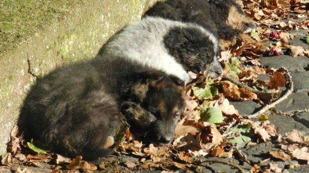 barcellona, cani, cuccioli, Messina, Sicilia, Cronaca