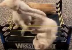 Forse il video più dolce della giornata (se amate i gattini) Uno dei tanti video da migliaia di clic sui social network - CorriereTV