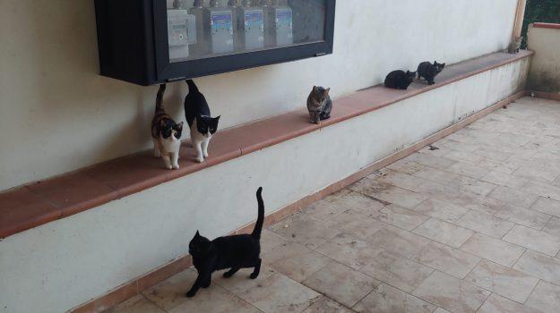 gatti, rossano, Cosenza, Calabria, Cronaca